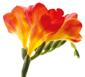 Fleurminisite